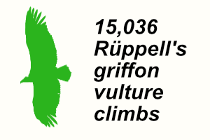 A Ruppell's griffon vulture graphic